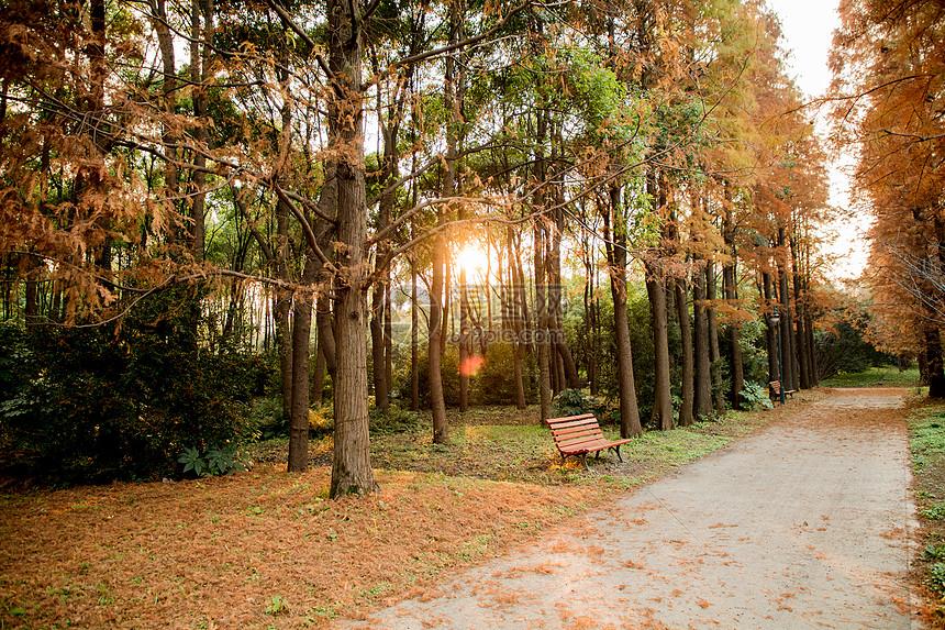 上海秋季滨江公园图片
