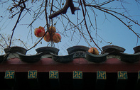 冬天成熟的果实图片
