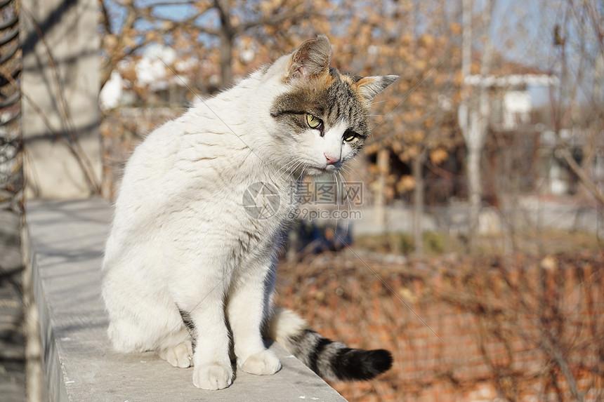 冬日里晒太阳的猫图片