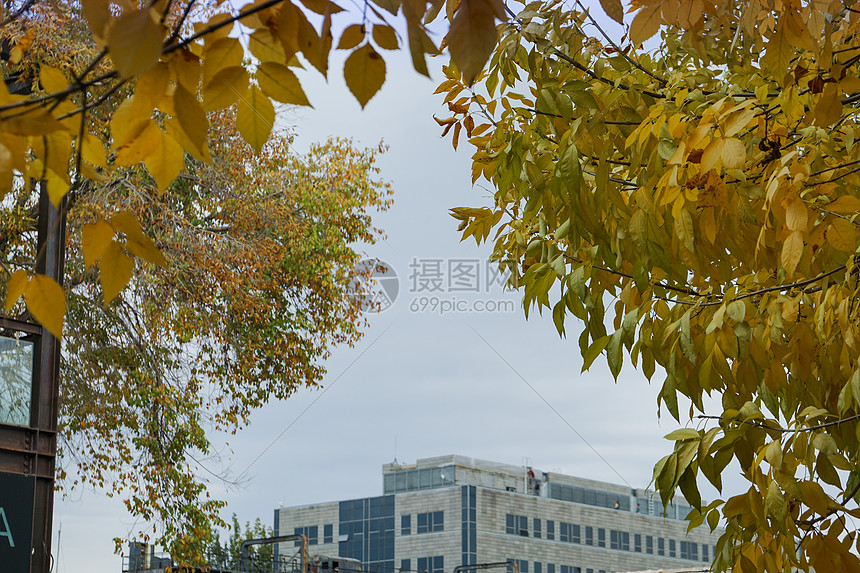 深秋黄色的叶子图片