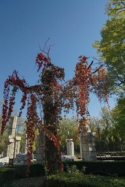 深秋的不知名的红叶图片