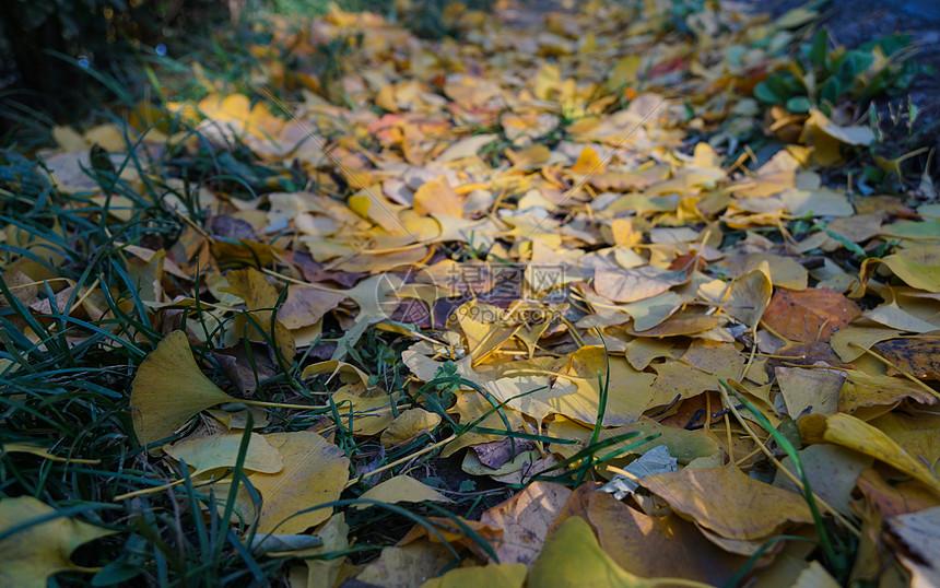 秋冬的落叶图片