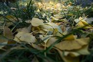 秋冬的落叶500758341图片
