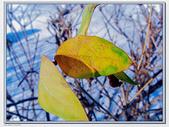 雪后的树枝和树叶图片