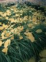秋冬的落叶500758410图片
