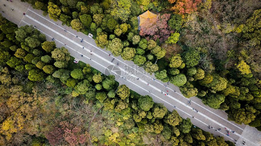 南京明孝陵神道鸟瞰图片