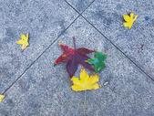 秋日的彩色落叶图片