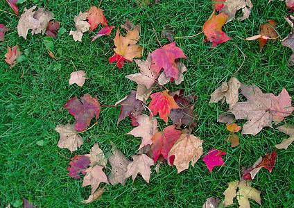 国外深秋红色的落叶图片