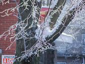 雪后的树枝图片