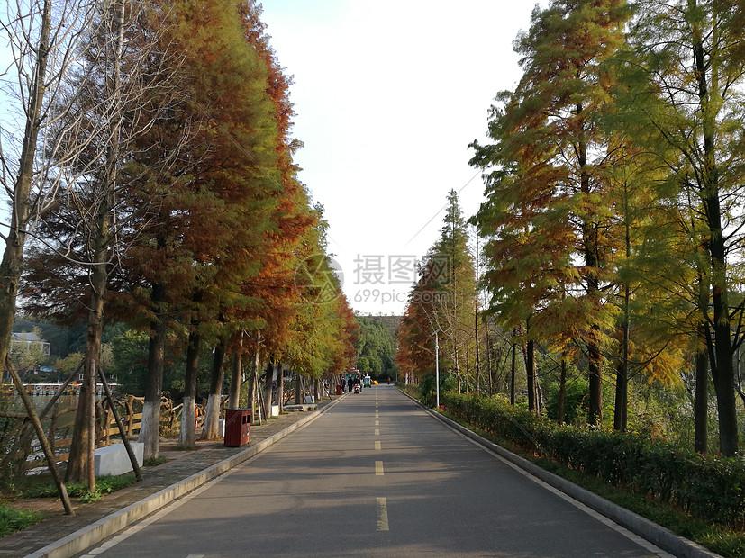 色彩缤纷的秋图片