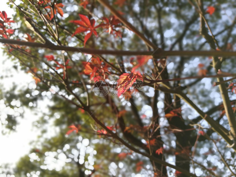 萌动秋日图片