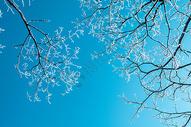 下过雪的树枝图片