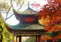 秋意绵绵图片