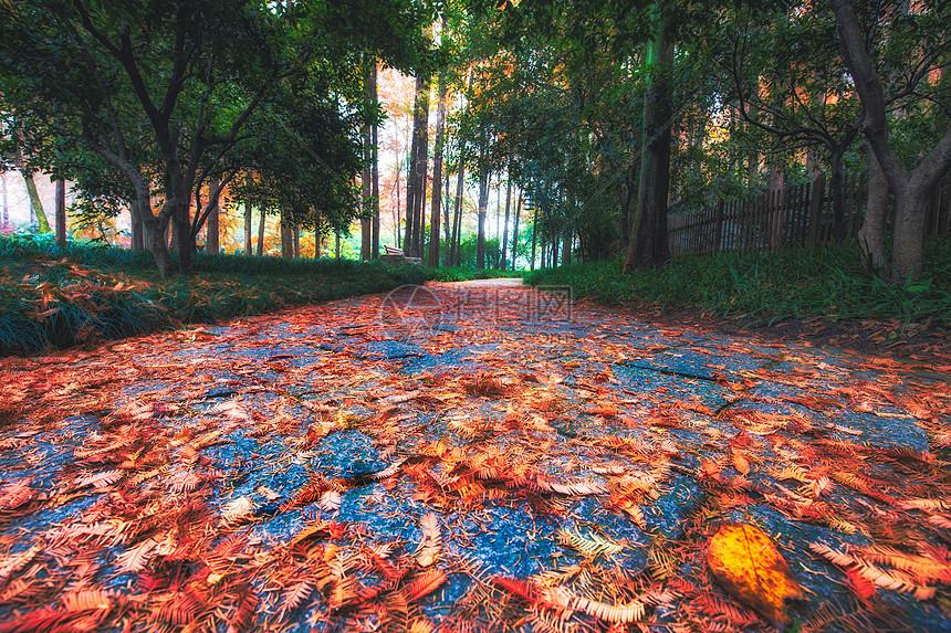 飘落在地的枫叶图片