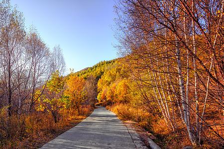 道须沟的秋天林荫路图片