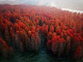 航拍湖中水杉图片