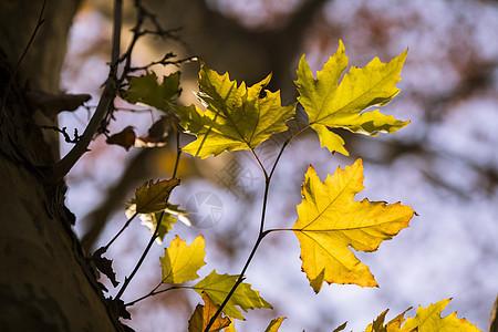 严冬叶子泛黄图片