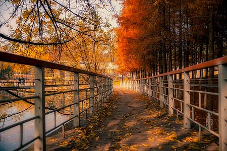 武汉落满树叶的幽静小路图片