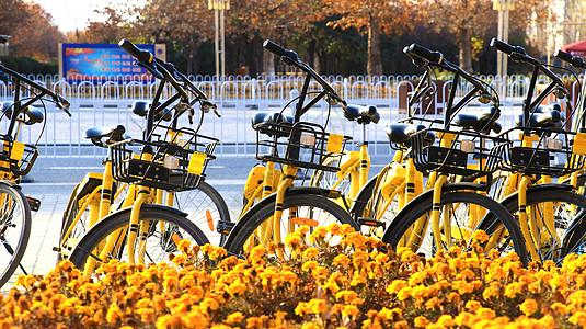 自行车与花图片