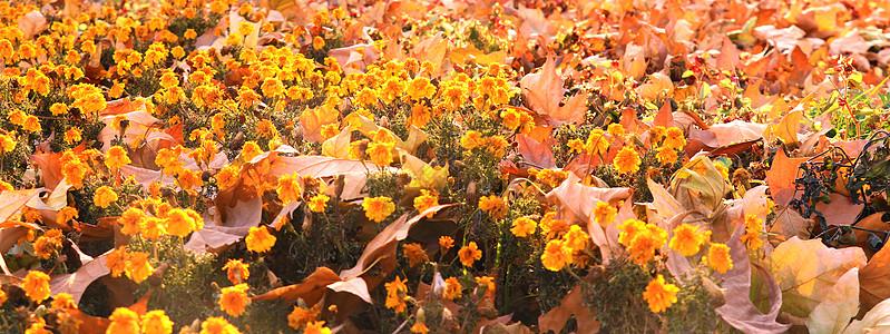 秋的花图片
