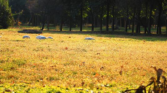 秋天的草地图片