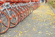 共享单车与银杏落叶图片