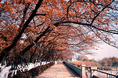 树木茂盛的林荫小道图片