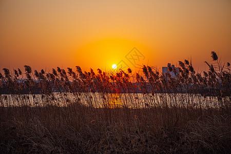 夕阳余晖下的芦苇荡图片