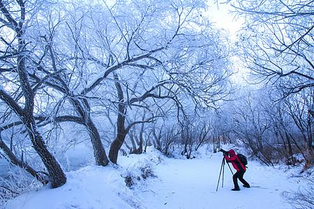 冬天森林背景