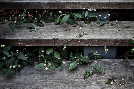 木台阶上的小白花图片
