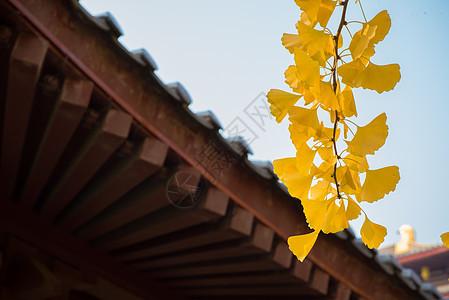 大唐芙蓉园银杏图片