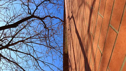 秋季红色的墙和树枝图片