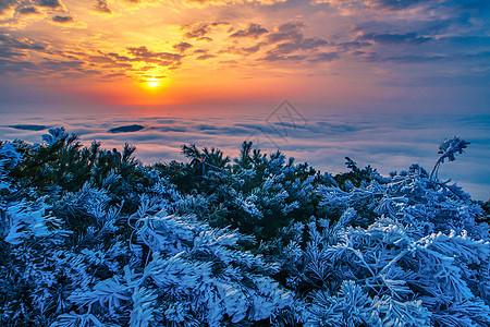 括苍山的日出与雾凇图片
