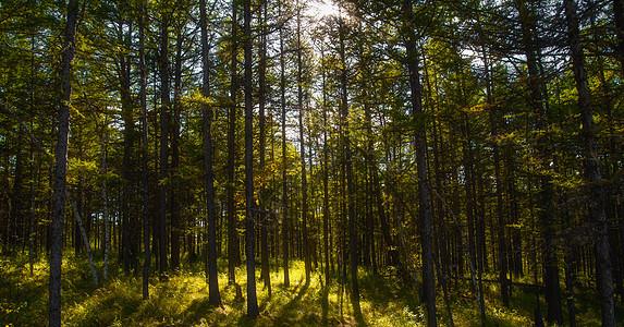 大兴安岭原始森林图片