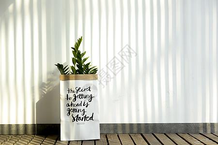 北欧盆栽图片