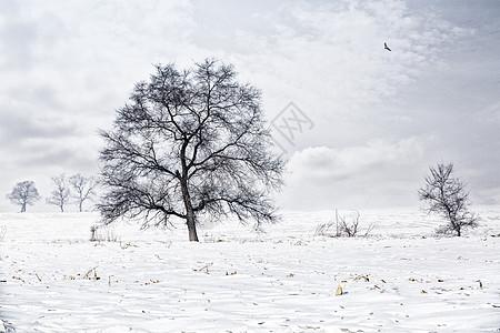 冰河雪地风光图片