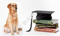 爱学习的狗图片