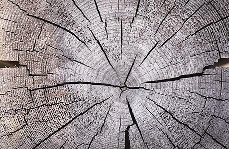时间树纹年轮背景图片