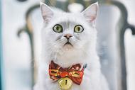 表情专注的猫图片