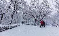 冬天被大雪覆盖的公园景观图片
