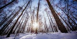 冬天森林里的雪景图片