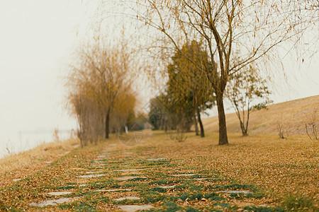 南京冬季鱼嘴湿地公园的路面图片