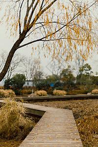 南京冬季鱼嘴湿地公园图片