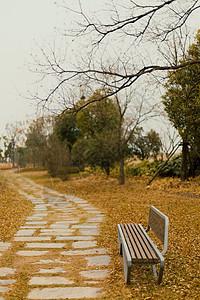 南京冬季鱼嘴湿地公园小路图片