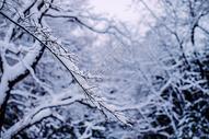 冬季被大雪覆盖的森林图片