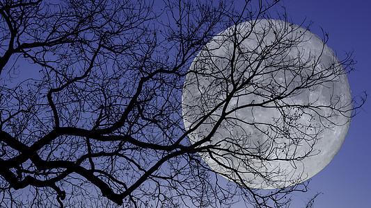 满月下的树枝剪影图片