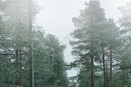 下雨天的森林图片