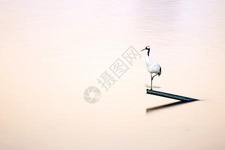 中国风仙鹤在水中央素材图图片
