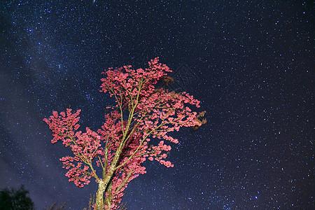 大理星空下的樱花树图片
