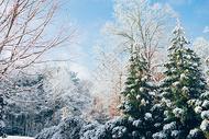雪后的植物图片